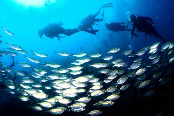 fish-15F090396C-AA8A-3ACA-9B40-4920F9A856F1.jpg