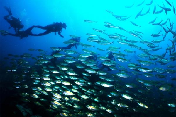 fish-1608BD5A45-0377-57B2-753D-C2865BEC2606.jpg