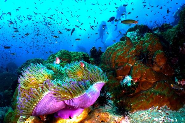 fish-17F51FAAB4-4F7D-14F4-DB51-C809CBEAAB16.jpg