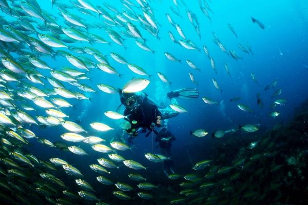 fish-199490ADA8-A902-CF64-7824-B35E7CBF6A98.jpg