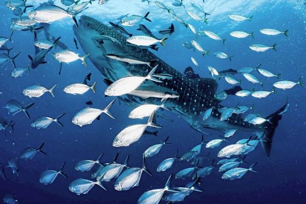 fish-1E9BA9703-AD0F-09CE-D4F9-EA9AC145DAB0.jpg