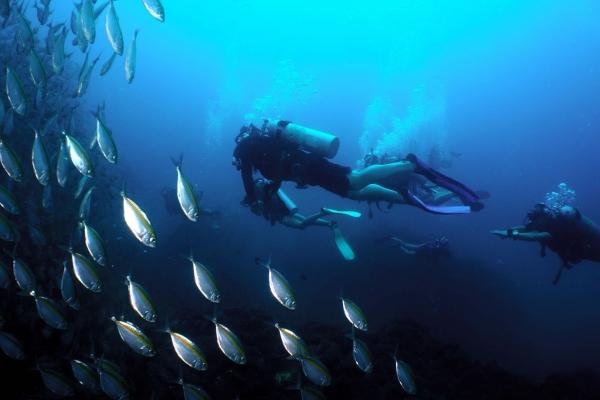 fish-2031C3D656-22F4-FD11-A2BD-48C58EC4D5C7.jpg