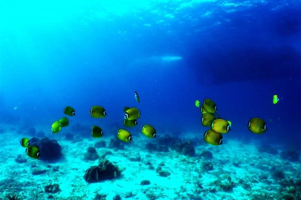 fish-4541DED0D-3E48-5CA6-944A-2C1E0CA8E63C.jpg