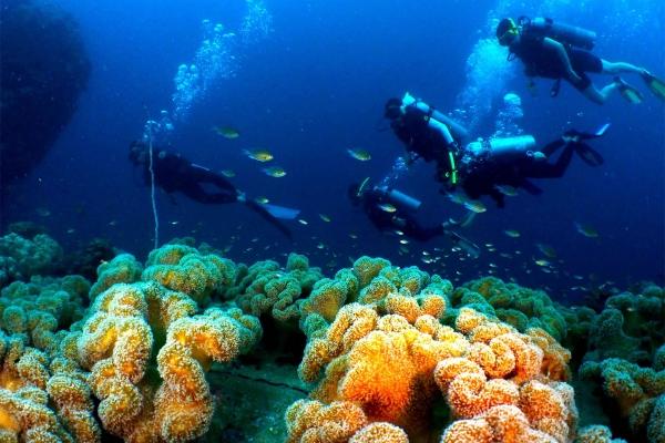 fish-866D8C391-1353-4D65-F787-525031E925CA.jpg